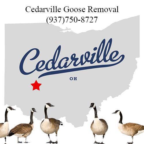 cedarville ohio goose removal (937)750-8727