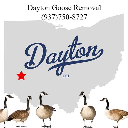 dayton ohio goose removal (937)750-8727