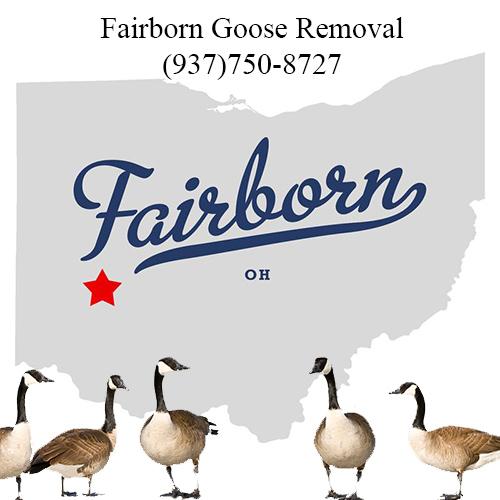 fairborn ohio goose removal (937)750-8727