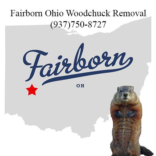 Fairborn ohio woodchuck removal