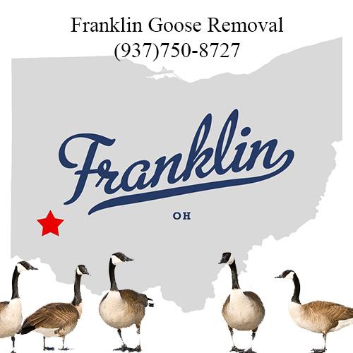 franklin ohio goose removal (937)750-8727
