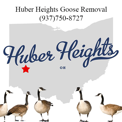 huber heights ohio goose removal (937)750-8727