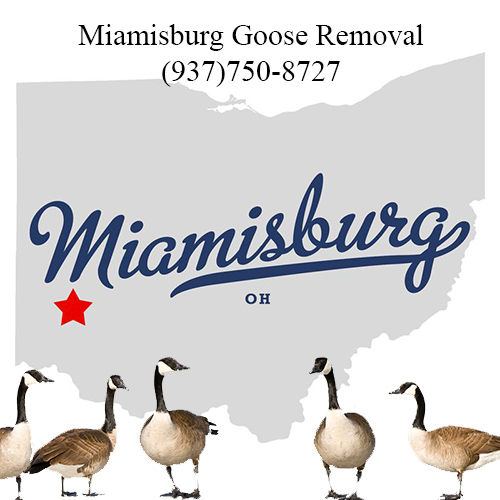 miamisburg ohio goose removal (937)750-8727
