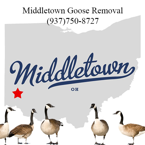 middletown ohio goose removal (937)750-8727