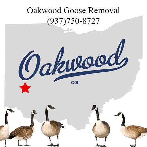 oakwood ohio goose removal (937)750-8727