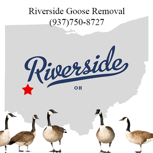 riverside ohio goose removal (937)750-8727