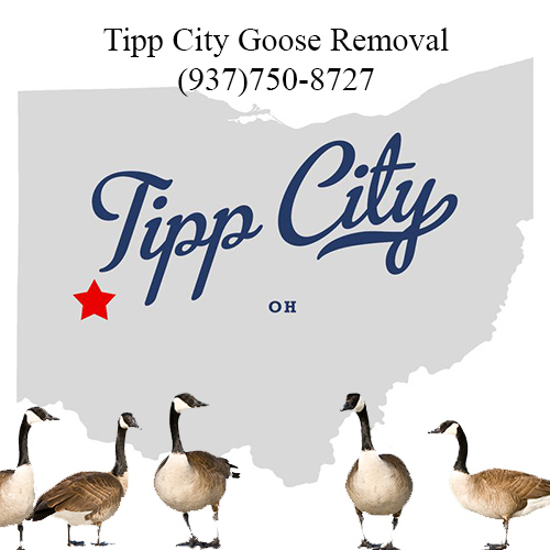 tipp city ohio goose removal (937)750-8727