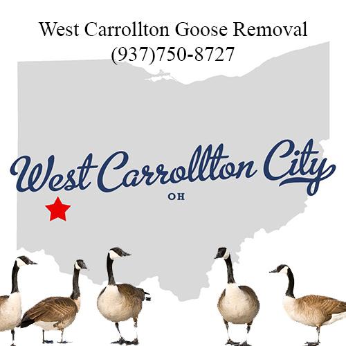 west carrollton ohio goose removal (937)750-8727