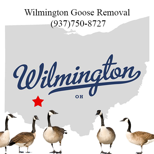 wilmington ohio goose removal (937)750-8727