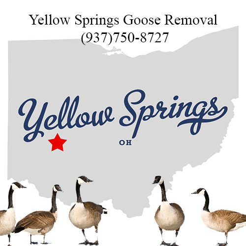 yellow springs ohio goose removal (937)750-8727