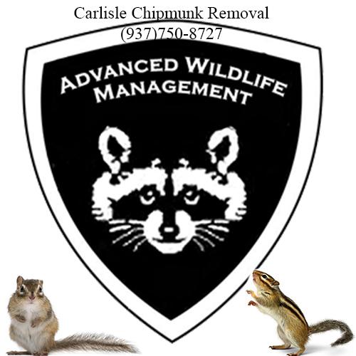 Carlisle chipmunk removal (937)750-8727