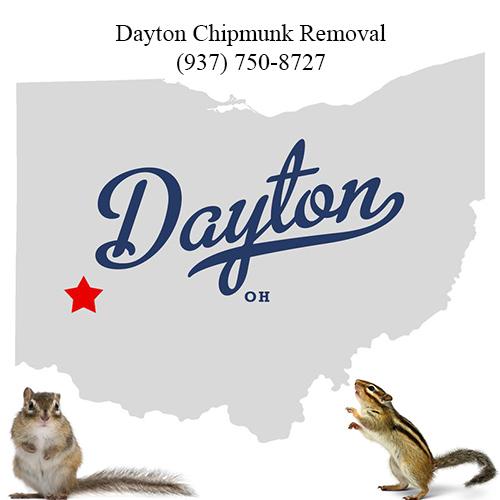 Dayton chipmunk removal