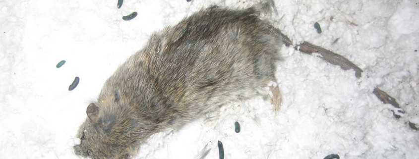 Dayton Dead Animal Removal Wildlife Control