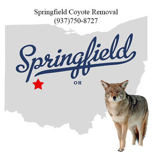 springfield coyote removal (937)750-8727