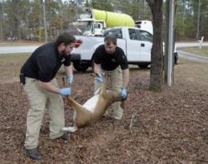 beavercreek dead deer removal