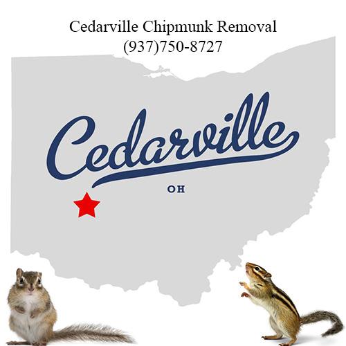 cedarville chipmunk removal (937)750-8727