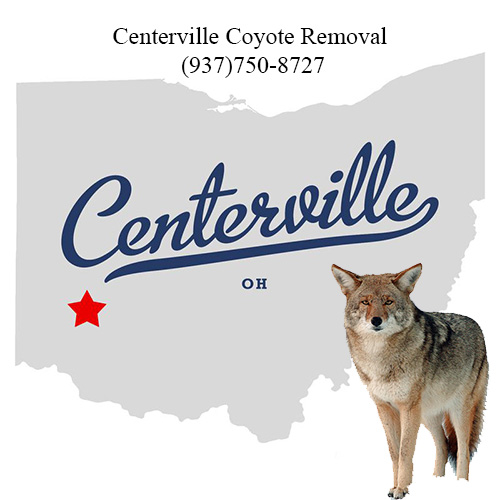 centerville coyote removal (937)750-8727