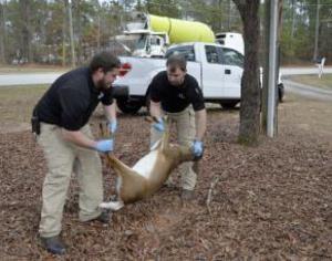 dayton dead deer removal