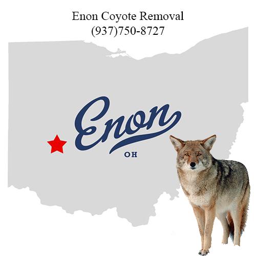 enon coyote removal (937)750-8727