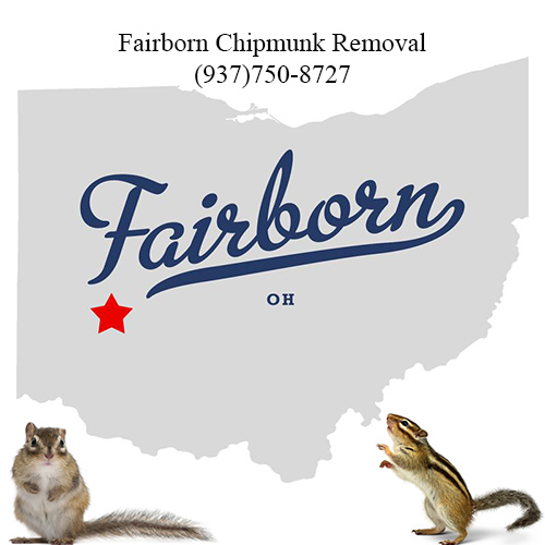fairborn chipmunk removal (937)750-8727