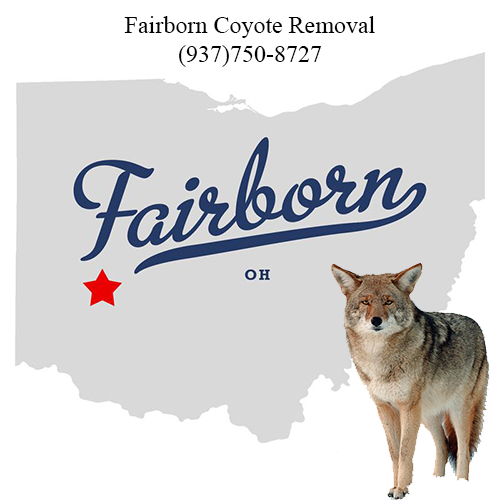 fairborn coyote removal (937)750-8727