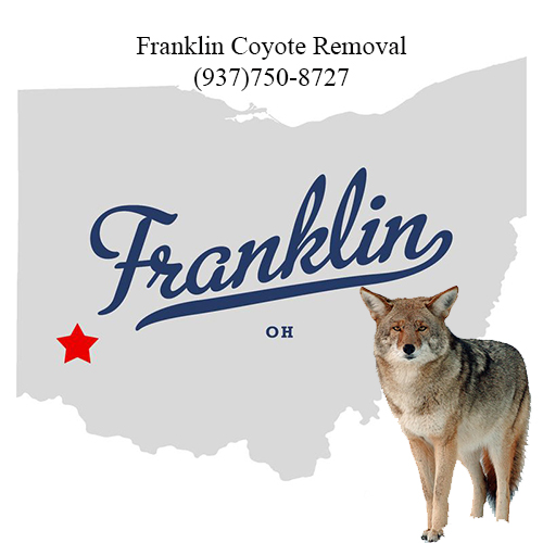 franklin coyote removal (937)750-8727