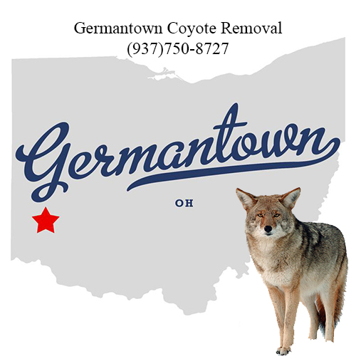 germantown coyote removal (937)750-8727