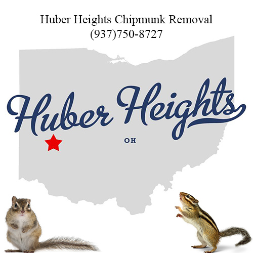huber heights chipmunk removal (937)750-8727