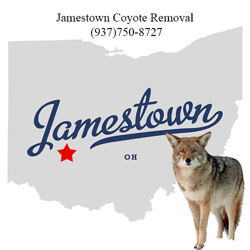jamestown coyote removal (937)750-8727