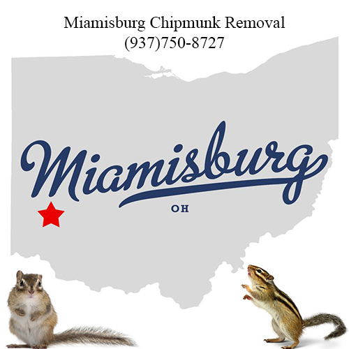 miamisburg chipmunk removal (937)750-8727
