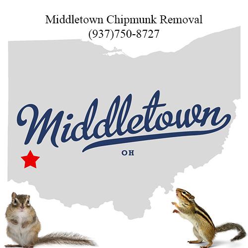 middletown chipmunk removal (937)750-8727