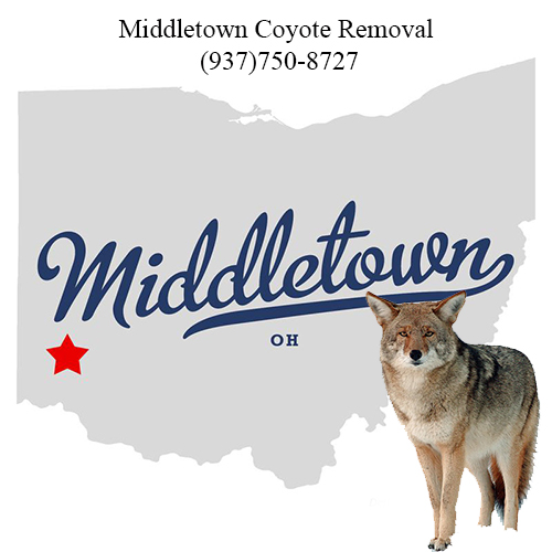 middletown coyote removal (937)750-8727