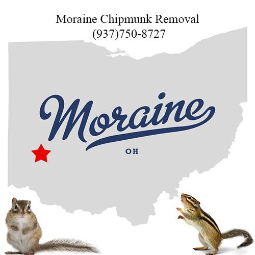 moraine chipmunk removal (937)750-8727