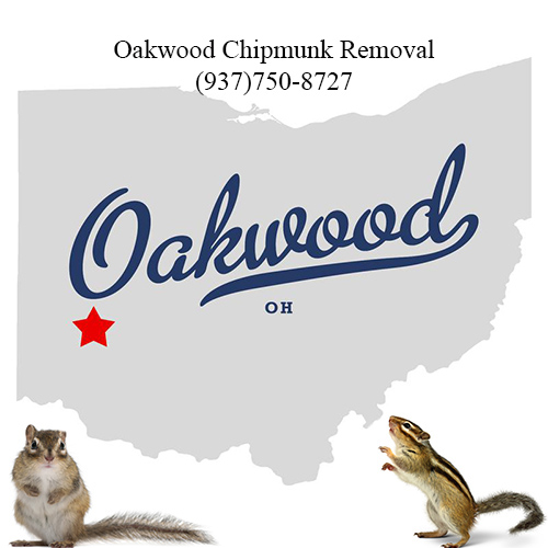 oakwood chipmunk removal (937)750-8727