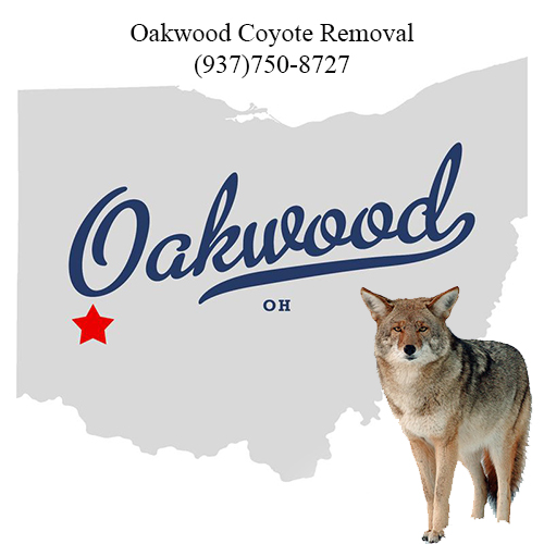oakwood coyote removal (937)750-8727