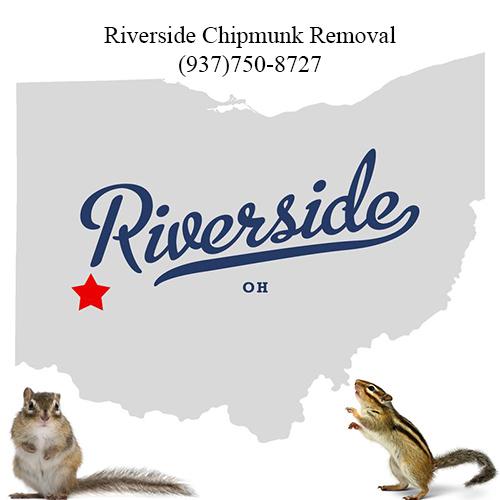 riverside chipmunk removal (937)750-8727