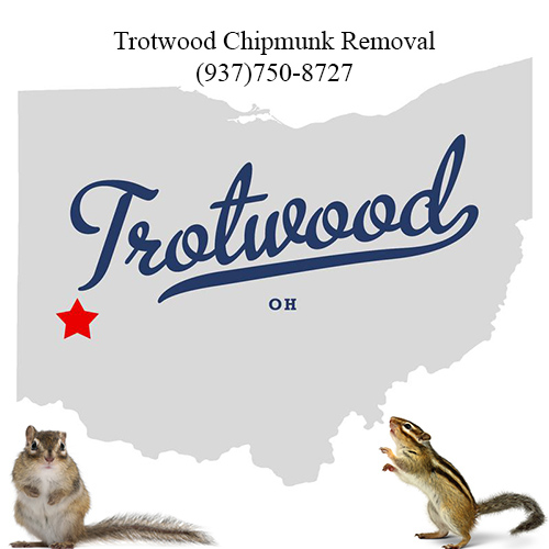 trotwood chipmunk removal (937)750-8727