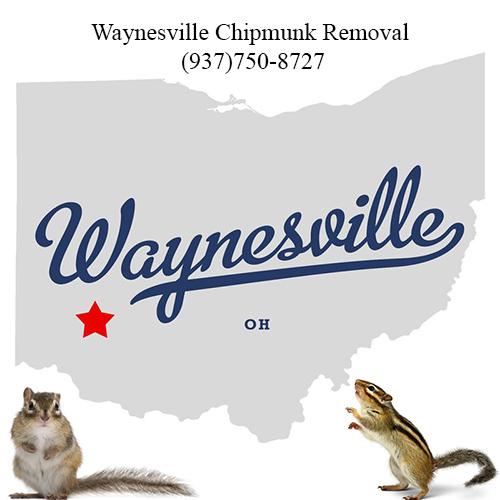 waynesville chipmunk removal (937)750-8727