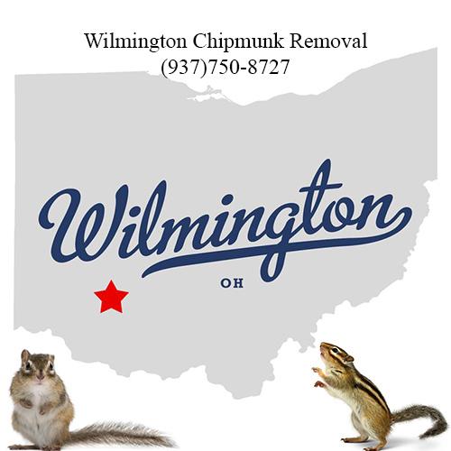 wilmington chipmunk removal (937)750-8727