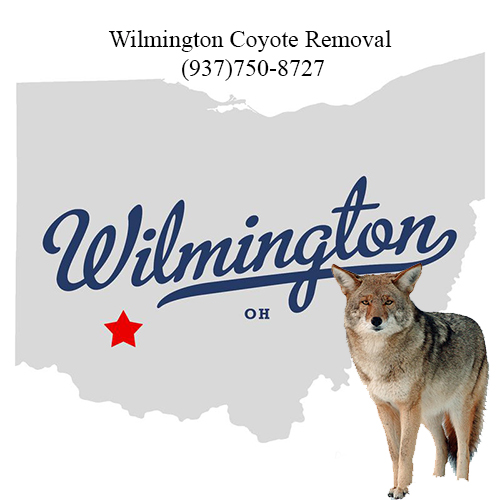wilmington coyote removal (937)750-8727