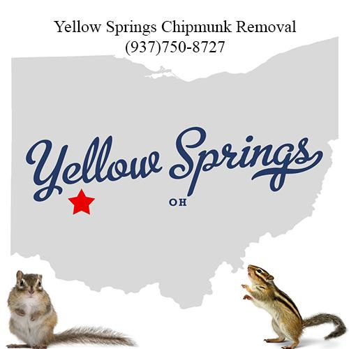 yellow springs chipmunk removal (937)750-8727
