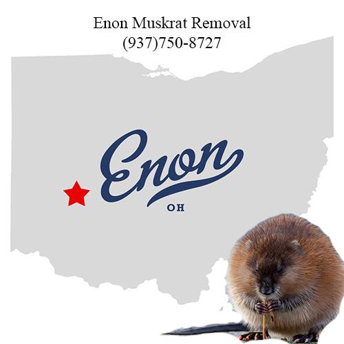 enon muskrat removal (937)750-8727
