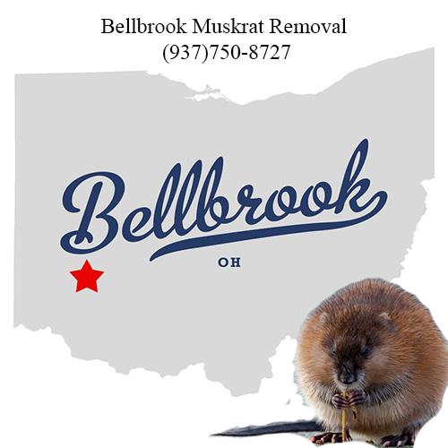 bellbrook muskrat removal (937)750-8727