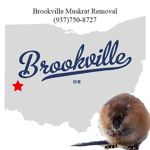brookville muskrat removal (937)750-8727