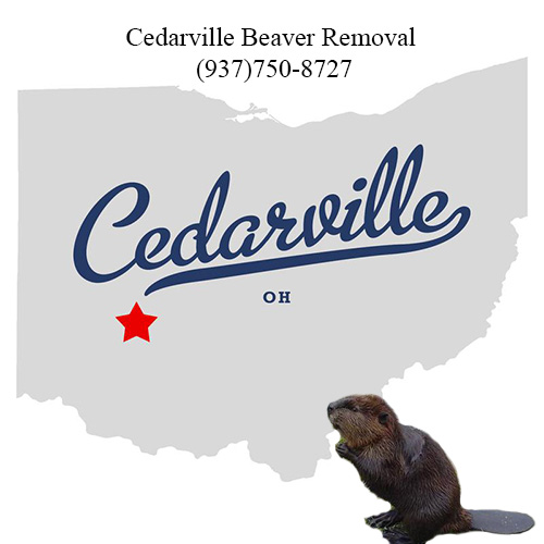 cedarville beaver removal (937)750-8727