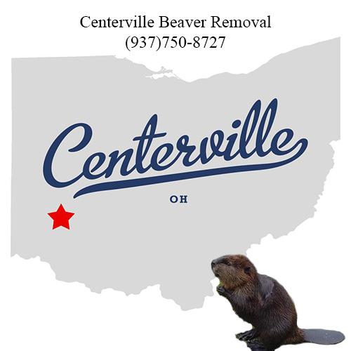 centerville beaver removal (937)750-8727