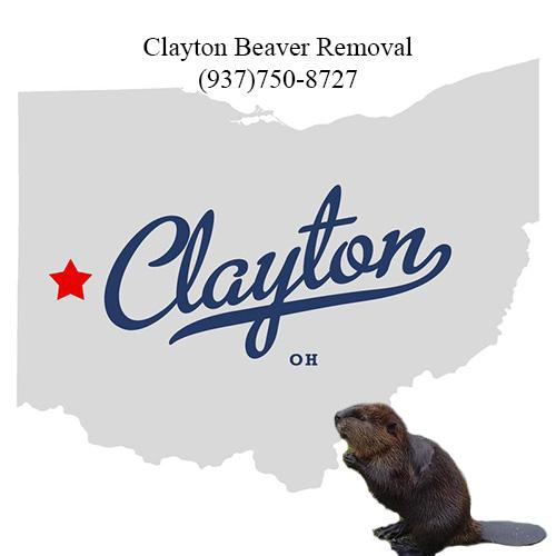 clayton beaver removal (937)750-8727