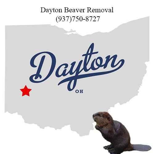 dayton beaver removal ohio (937)750-8727