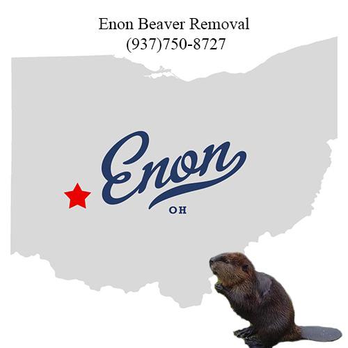 enon beaver removal (937)750-8727