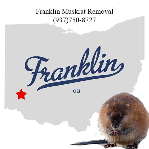 franklin muskrat removal (937)750-8727